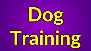 Dogs Trainer - How To Become One