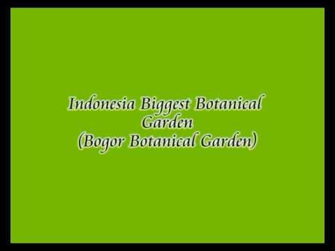 bogor botanical garden.flv