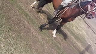 обучение лошади Алтай