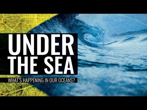 Under the Sea: What's Happening in Our Oceans - Professor Carolyn Roberts