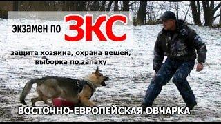 ВЕО на ЗКС - защитно-караульная служба, дрессировка. Испытания по ЗКС. Собака Лера