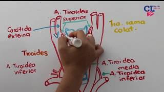 Tamilselvi arteria carótida en