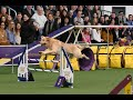 Best of Masters Agility Championship at Westminster | WKC