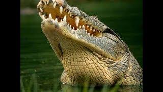 Самые голодные водные доисторические животные Супер хищник Земли Прожорливые рептилии Гений охоты