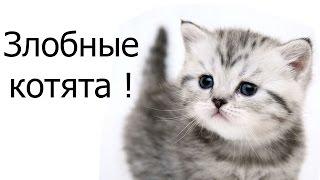 Злобные котята !