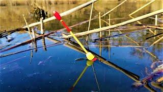 ЛОВЛЯ КАРАСЯ на ПОПЛАВОК Зимой Рыбалка на карася на поплавок