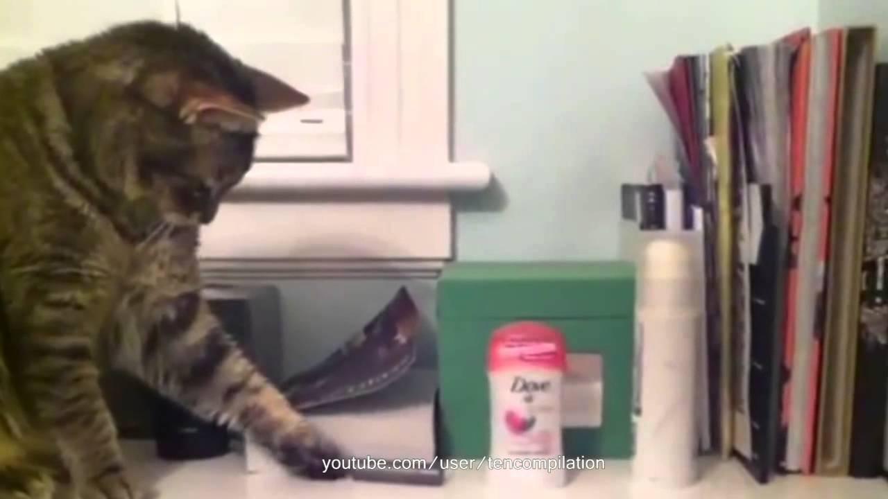 Самые смешные и популярные коты интернета!