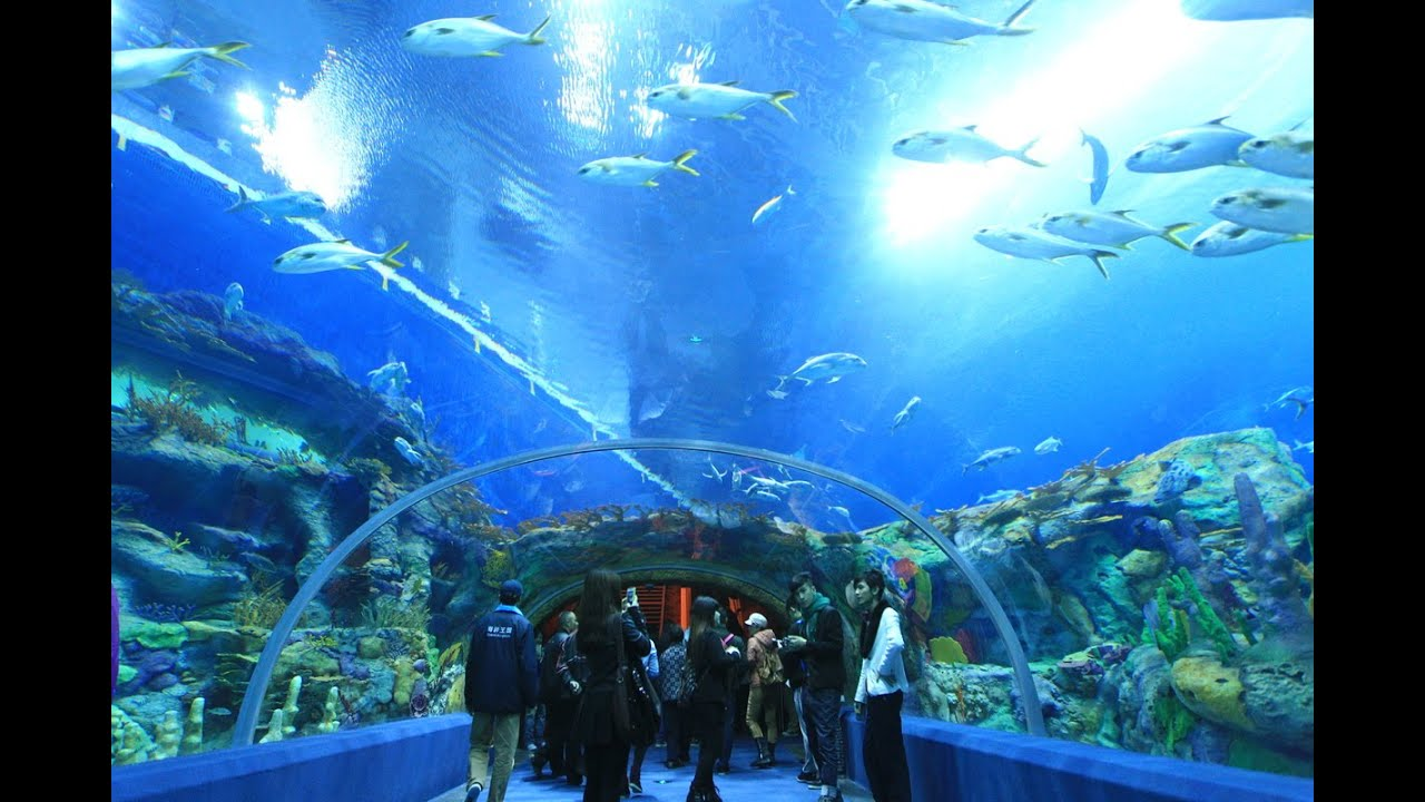 10 Best Aquariums In The World - YouTube