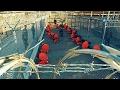 survivre en Guantanamo 'top films' 2017 film complète français