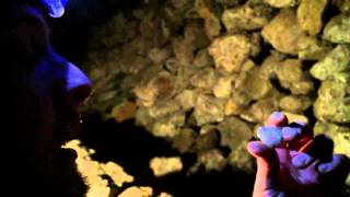 Underground Cave Mining for Gold in the California Motherlode, 2015