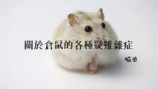 【喵桑】關於倉鼠的各種疑難雜症