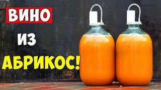 как сделать вино из абрикоса