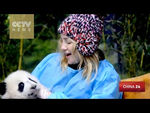 "Kate Hudson ""falls in love"" with baby panda"