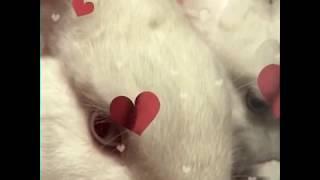 分身の術・・・じゃないよ! W(ダブル)ウサウサ⌒(*^ x^)⌒ ⌒(╹ x ╹)⌒   ⌒(*^ x^)⌒ ⌒(╹ x ╹)⌒ ウサギ【rabbit・hare・bunny】 thumbnail