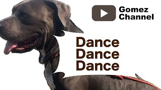 Dance with Pitbul by AmsHouse&co.