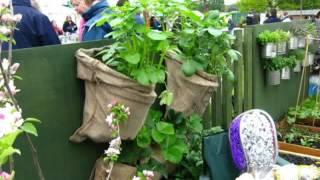 Small Home kitchen garden ideas