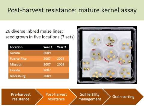 Monitoring and Managing Mycotoxins on Maize | Rebecca Nelson