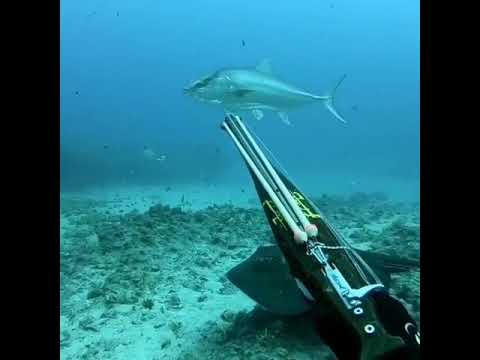 Spearfishing Amberjack In The Mediterranean Sea