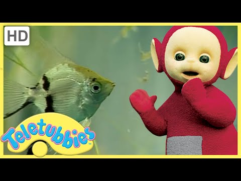 ★Teletubbies English Episodes★ Tropical Fish ★ Full Episode - HD (S08E203)