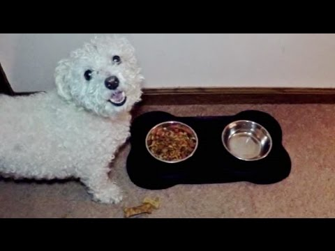 Double Dog Bowl Review By Bichon Roxy Youtube