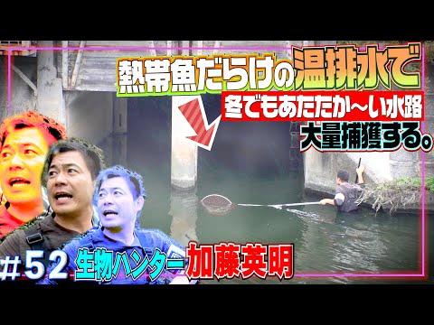 生物ハンター加藤英明【公式】かとチャンYouTube投稿サムネイル画像