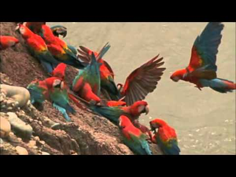 Download Macaw Breeders Podcast #11