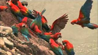 Macaw Breeders Podcast #11