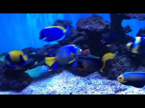Saltwater Marine Fish Only Tank