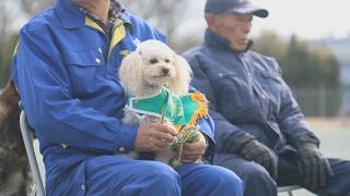 小犬ながら茨城県警の嘱託警察犬に採用されたトイプードル「アンズ」(...