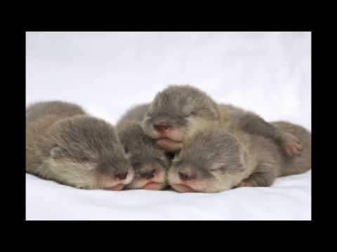 【효과100%】 애완동물을 잠재우기 위한 음악 :: Pet Lullaby for easily falling a sleep