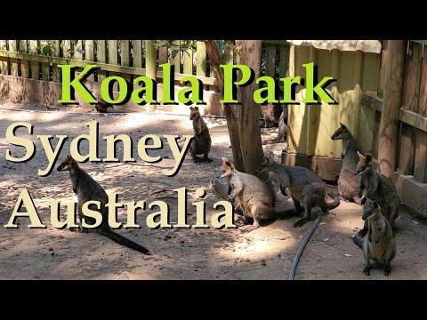 Koala Park Sydney Australia