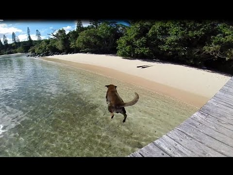 Dog Abandoned on Casy Island - New Caledonia