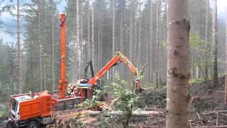 Syncrofalke MM, Holz Reiter Salzburg GmbH