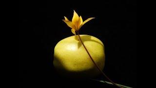 Download Лечебная музыка Моцарта.Исцеление Основных Систем Организма Mozart Therapeutic music Mp3 and Videos