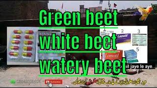 kabootar ki har bimari ka ilaj|| special for green bheet by