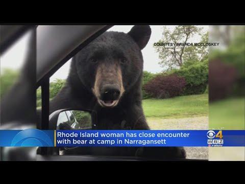 Lisa St. Regis - Car Door Tug-of-War with Bear Caught on Camera