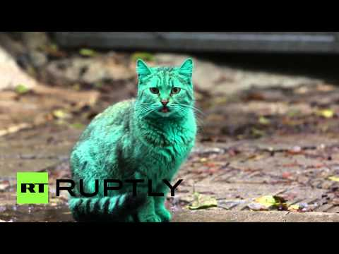 Emerald Green Cat Haunts Bulgaria's Black Sea Coast