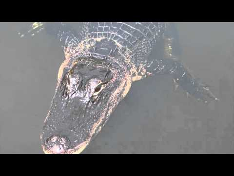 Best Everlades Airboat Tour in Miami Florida