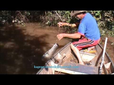 Pescaria de Pintado