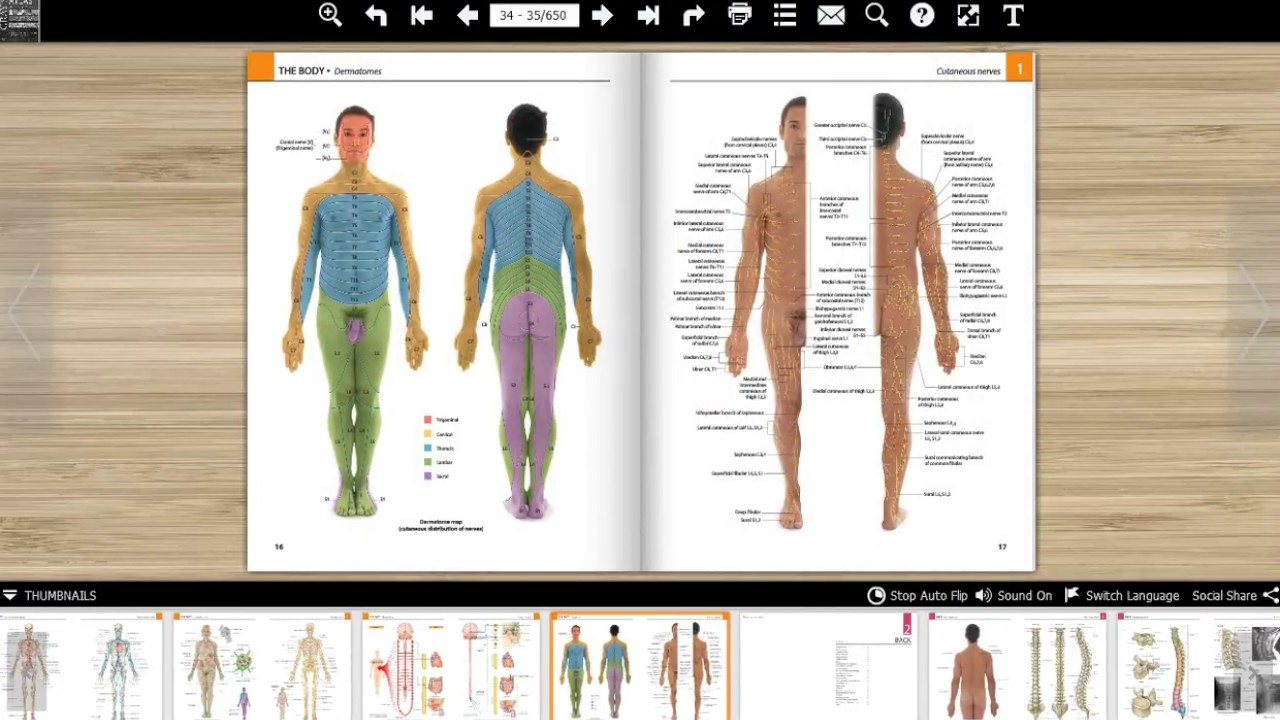 Gray\'s atlas of anatomy 2nd edition - YouTube
