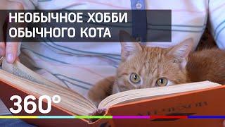 Читающий кот! Это не шутка