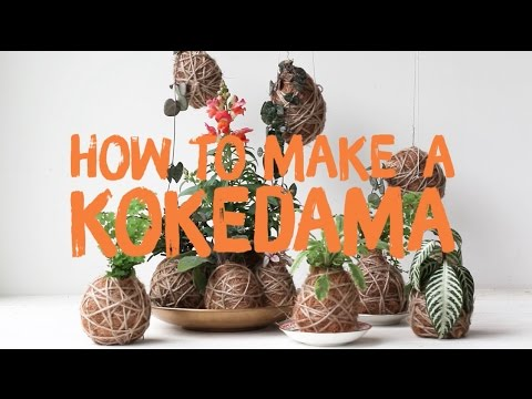 Annabel's guide to making your own kokedamas