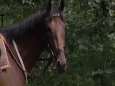 British Horseracing Authority.rv