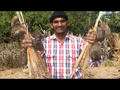 OLDEST STREET FOOD IN INDIA | MY VILLAGE FOOD GENGUL | PALM SPROUTS | PANA KILANGU | TRADITIONAL