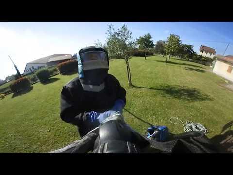 Nouveau ! Vidéo 360° HD sur un nid de frelon asiatique
