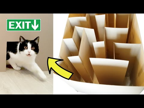 Cat's maze. Where's the exit???
