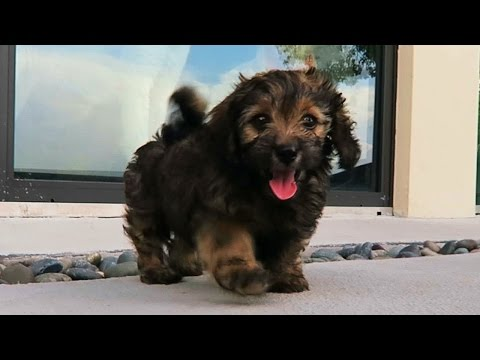 A NEW PUPPY?! (Super Cooper Sunday #67)