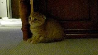 仔猫が可愛がられるのにヤキモチを妬いて、隙をみて後ろから蹴りを入れ...