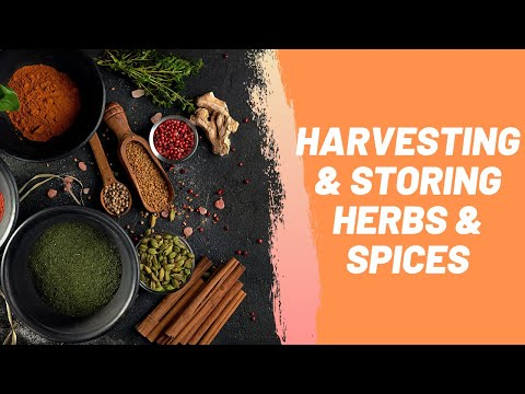 Harvesting & Storing Herbs & Spices