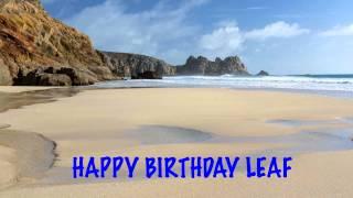 Leaf   Beaches Playas - Happy Birthday